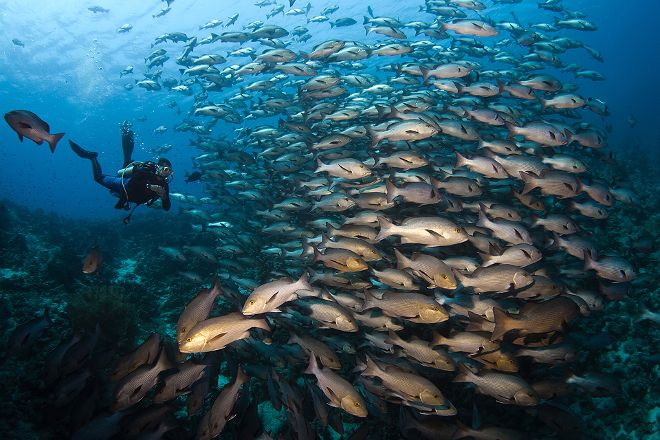 Camel Dive Club, Sharm El Sheikh, Egypt
