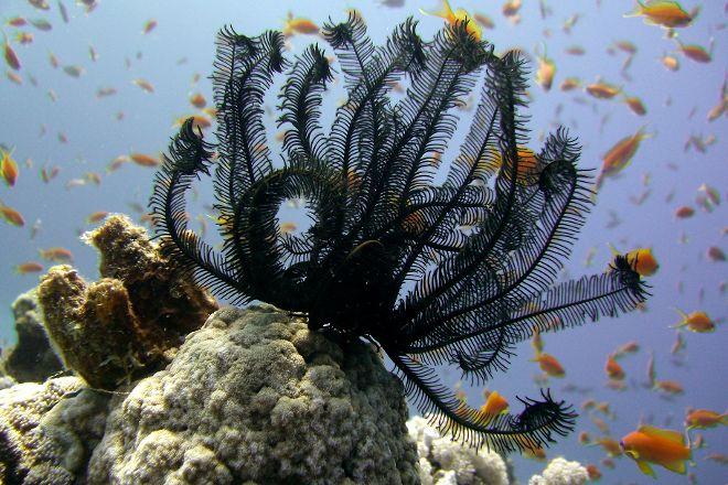 Coral Reefs, Dahab, Egypt