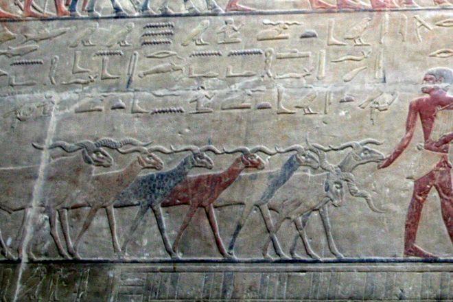 Mastaba of Ti, Giza, Egypt