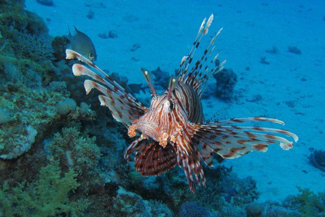 Sataya Reef, Marsa Alam, Egypt