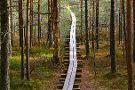 Beaver Trail