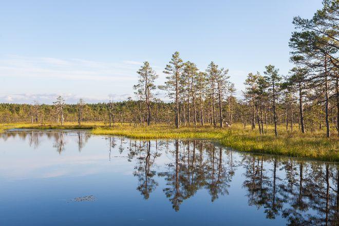 Viru Bog Trail, Kolga, Estonia