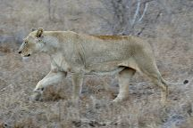 Hlane Royal National Park, Lubombo District, Eswatini (Swaziland)