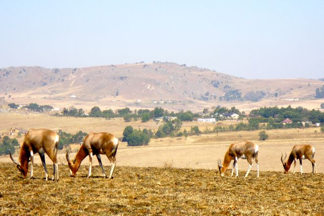 Malolotja Nature Reserve, Hhohho District, Eswatini (Swaziland)