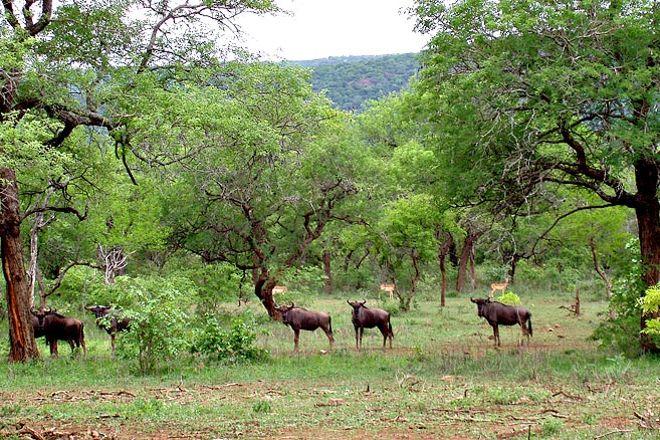 Mlawula Nature Reserve, Siteki, Eswatini (Swaziland)