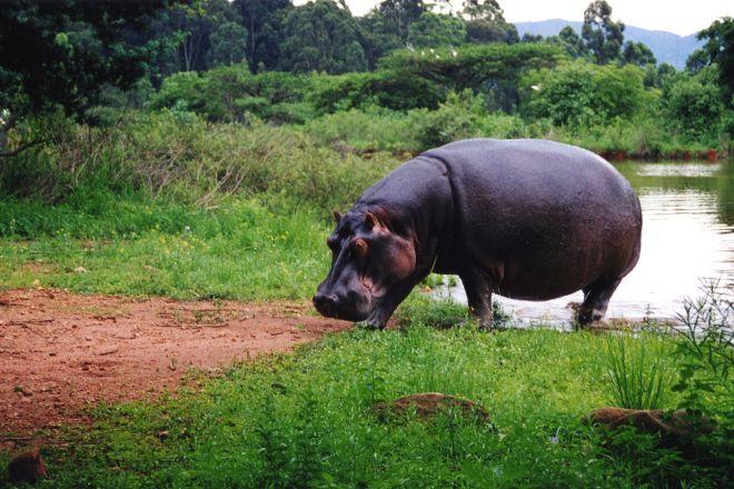 Mlilwane Wildlife Sanctuary, Ezulwini, Eswatini (Swaziland)