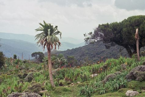 Bale Mountains, Goba, Ethiopia