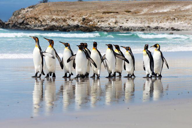 Estancia Excursions, Stanley, Falkland Islands