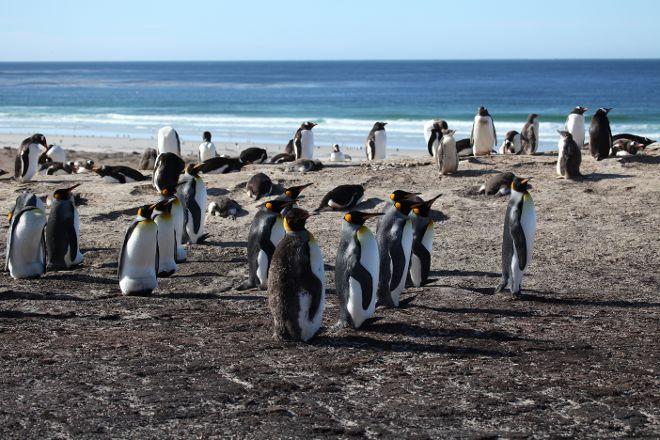 Saunders Island, West Falkland, Falkland Islands