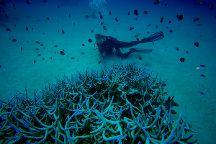 Tokoriki Diving at Tokoriki Island Resort