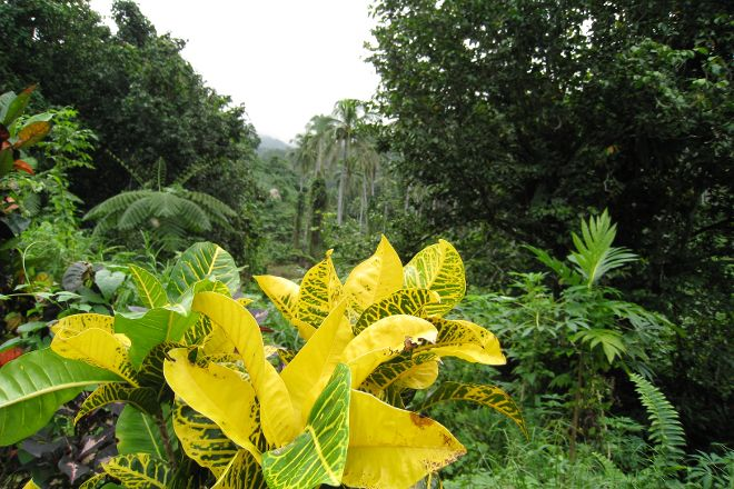 Bouma National Heritage Park, Taveuni Island, Fiji