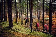 Urho Kekkonen National Park, Saariselka, Finland