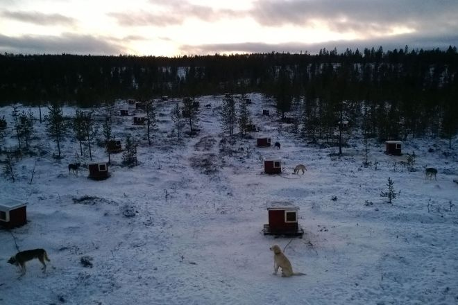 Extreme Huskies, Ivalo, Finland