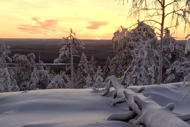 Happy Fox, Rovaniemi, Finland