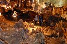Aven Grotte Forestiere