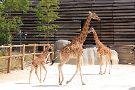 Parc Zoologique de Paris