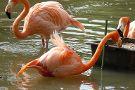Reserve Zoologique de Sauvage