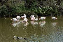Le Parc Ornithologique de Pont de Gau, Saintes-Maries-de-la-Mer, France