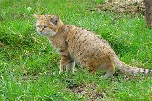 Parc des Felins, Lumigny-Nesles-Ormeaux, France