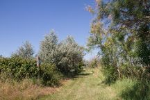 Parc Naturel Regional de Camargue, Arles, France