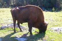 Reserve Bisons d'Europe, Sainte-Eulalie, France