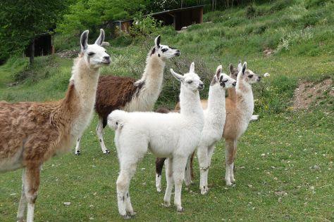 La Ferme des Lamas, Auzat, France