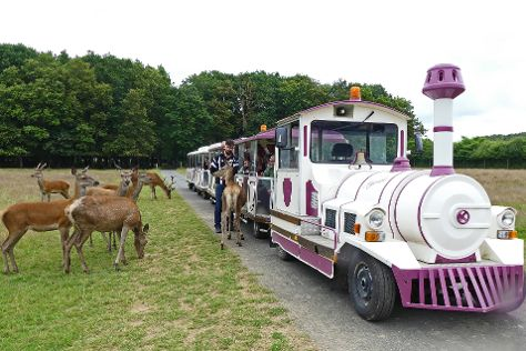 Safari Train -Reserve de Beaumarchais, Autreche, France