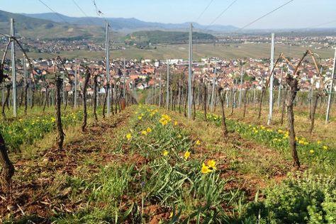 Vins d'Alsace Hubert KRICK, Wintzenheim, France