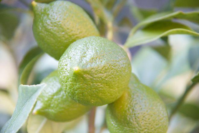 Au Pays du Citron, Menton, France
