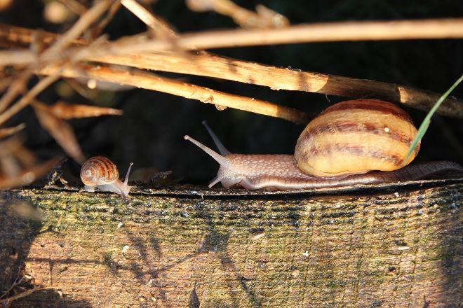 Escargot Bourguignon, Vernot, France