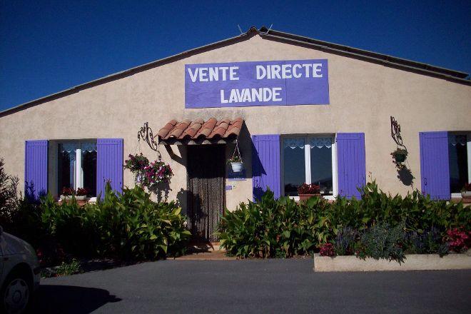 Lavande Angelvin, Valensole, France