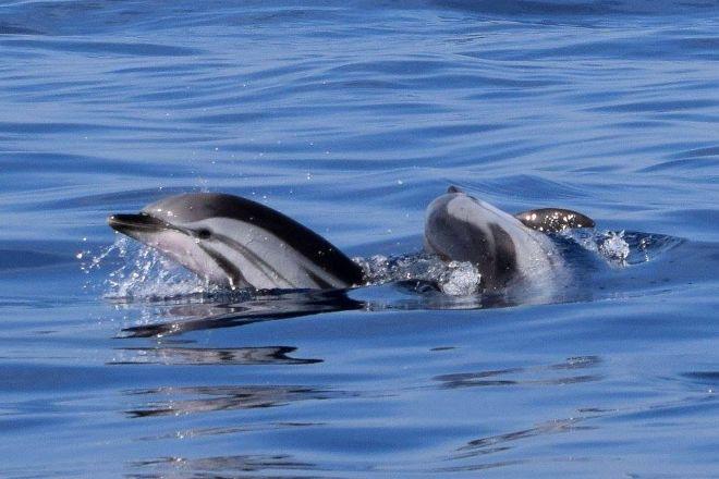 Moguntia - Nage avec Dauphins, Antibes, France