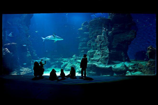 Planet Ocean Montpellier, Montpellier, France
