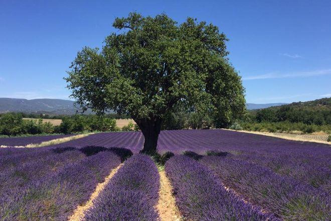 Sentoline, Ecotourisme en Provence Day Tours, Marseille, France