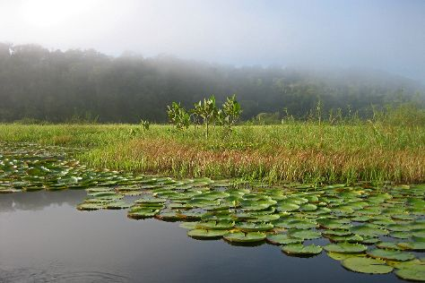 Marshes of Caw, Arrondissement of Cayenne, French Guiana