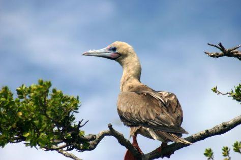 Ile Aux Oiseaux, Tikehau, French Polynesia