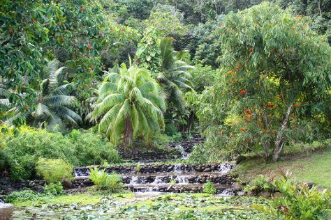 The Water Gardens of  Vaipahi, Taravao, French Polynesia