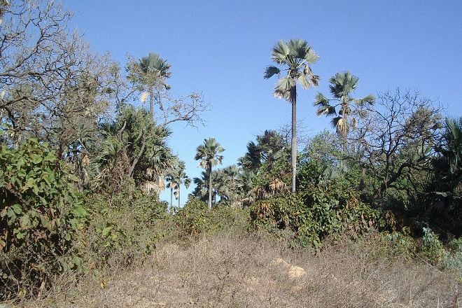 Bijilo Forest Park, Banjul, Gambia