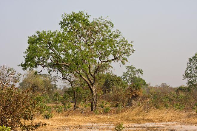Kiang West National Park, Banjul, Gambia