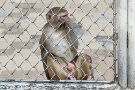Sukhumi Monkey Nursery