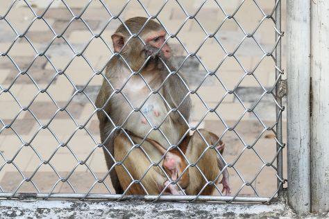Sukhumi Monkey Nursery, Sukhumi, Georgia