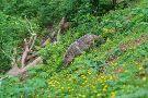 Alternativer Wolf- Und Barenpark Schwarzwald