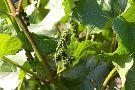 Weingut - Weinstube Sankt Michael