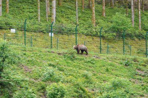 Alternativer Wolf- Und Barenpark Schwarzwald, Bad Rippoldsau-Schapbach, Germany