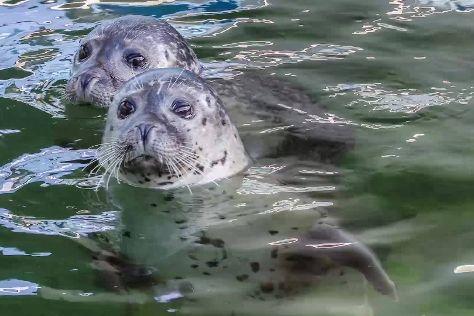 Aquarium Wilhelmshaven, Wilhelmshaven, Germany