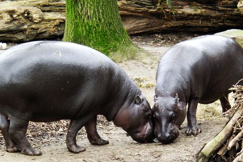 Zoo Duisburg, Duisburg, Germany