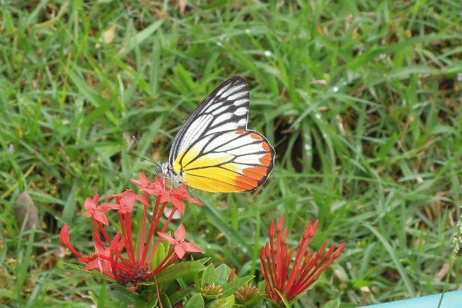 Schmetterlingsfarm Trassenheide, Trassenheide, Germany