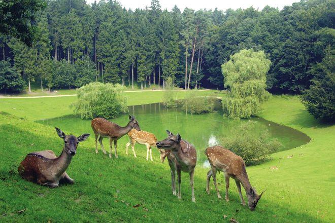 Wildpark Schwarze Berge, Rosengarten, Germany