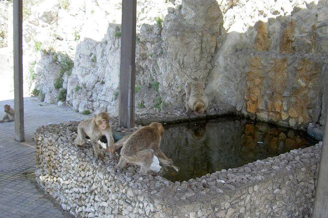 Apes Den, Gibraltar