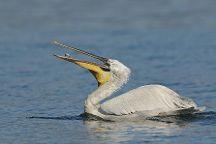 Birding in Greece